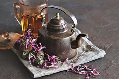 Léčivá echinacea